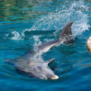 Nager avec les dauphins – Dolphin Reef – Eilat